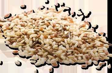 Oryza sativa, poudre de riz bio pour ses vertus adoucitant et matifiante